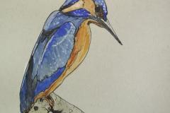 Fauna-Kingfisher-IMG_4618
