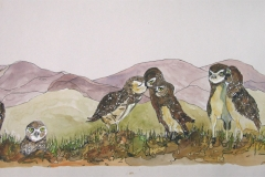Fauna-Owls