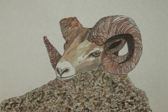 Fauna-Ram
