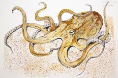 Fauna-octopus