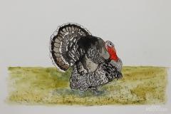 W-Turkey-Orlopp-Bronze