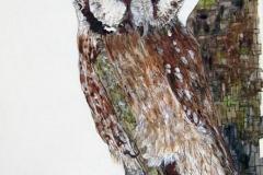 c-Barn-Owl