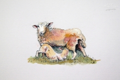 cw-ewe-and-lamb