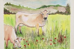 cw-jerseys-in-pasture