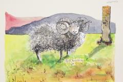 cw-north-ronaldsay-sheep