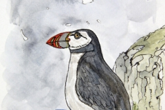 cw-puffins