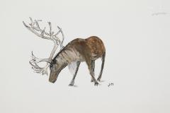 cw-reindeer