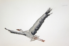 cw-soaring