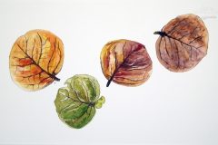 Flora-4Bay-leaves