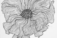 Flora-Poppy