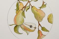 W-Pears