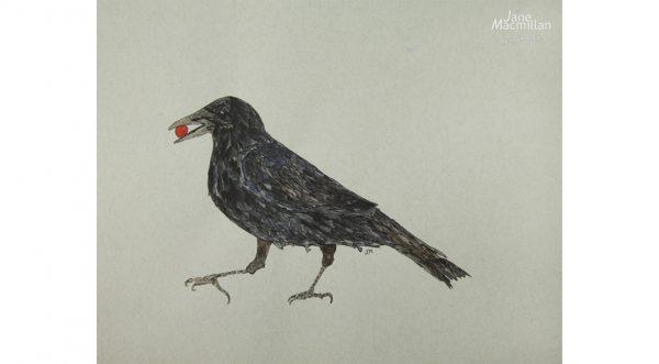Strutting Crow