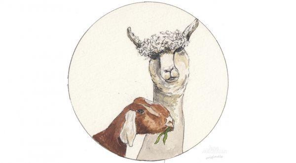 Alpaca & Nubil