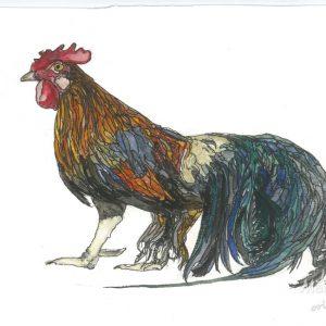 phoenix rooster