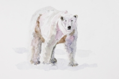 Polar-Bear-3