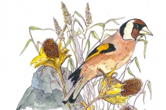 European-Goldfinch