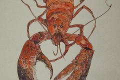 Fauna-GIMG_4413-Lobster