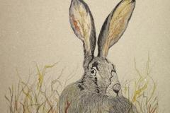 Fauna-Hare