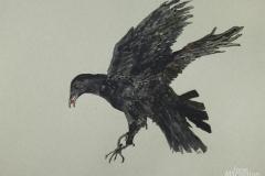Flying-Crow