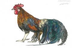 Phoenix-Rooster