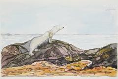 Polar-Bear-scanning