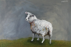 Sheep-looking-Back