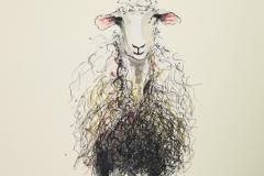 Sole-Sheep