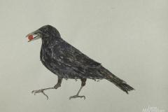 Strutting-Crow