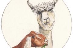 Alpaca-Nubil