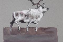W-Caribou-in-Winter