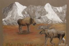 W-Moose-on-the-Tudra