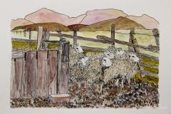 Sheep-Exiting