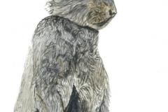 Silver-Fox-Rabbit-copy