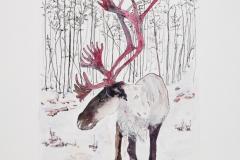 Woodland-Caribou-2