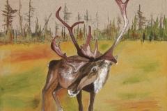 Woodland-Caribou