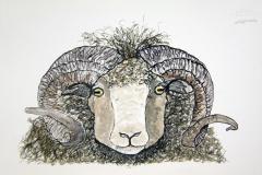Rams-Head