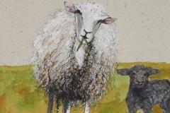 ewe-and-black-lamb