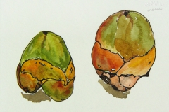Flora-Palm-Nuts