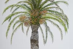 Flora-Palm-Tree