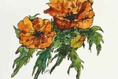 Flora-Poppies