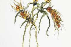 Flora-Wheat