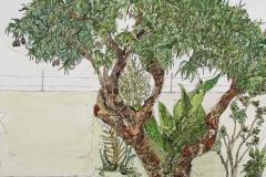 cw-mango-tree