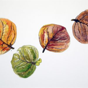 Four Bay Leaves