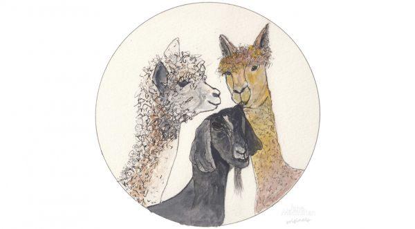 Alpacas & Black Nubil