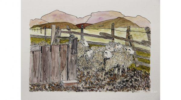 Sheep Exiting